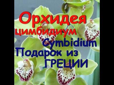 САЙТ ОРХИДЕЯ - ОРХИДЕИ- СОДЕРЖАНИЯ. ФОТО