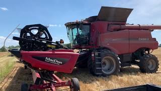 Wheat harvest 2019 // Farm Vlog