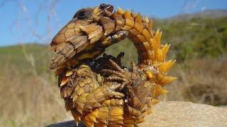 Волосатый краб? Необычные животные мира.