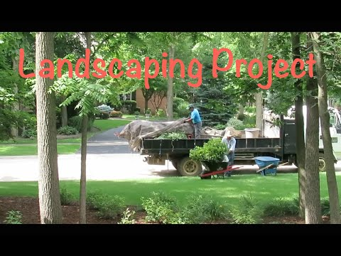 Landscaping Project!