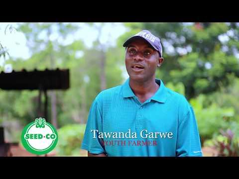 Youths In Agriculture: Tawanda Garwe