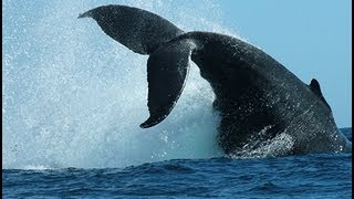 Whale Watching - Cape Cod