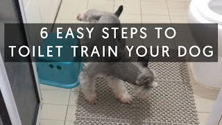 6 Easy Steps How To Toilet Train Your Dog.