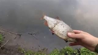 Ловля рыбы на пиявку, как добыть серую пиявку. Ужасная смерть рыбы.