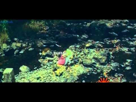 Tara navel song