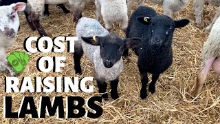 how-much-does-it-cost-us-to-raise-a-lamb-from-wean-to-market-vlog-233