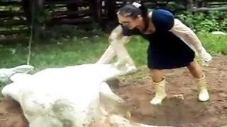 smieszne zwierzęta 18+ krowy - straszne smiertelne wypadki oraz zabawne wpadki youtube filmiki 2017