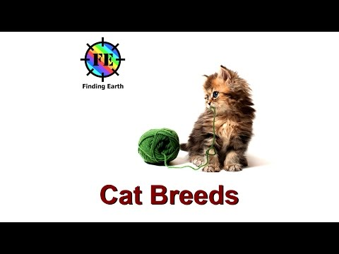Popular Cat Breeds - Finding Earth