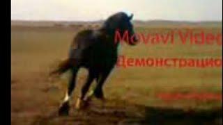Тяжеловоз, случка лошадей