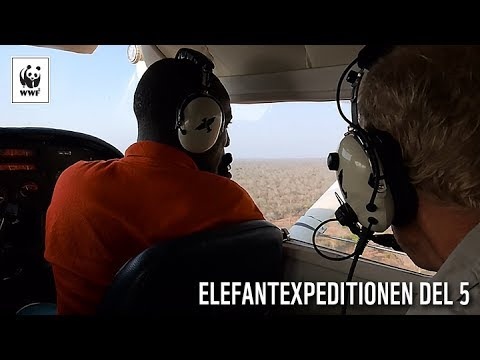 Elefantexpeditionen del 5: Elefanträkningen