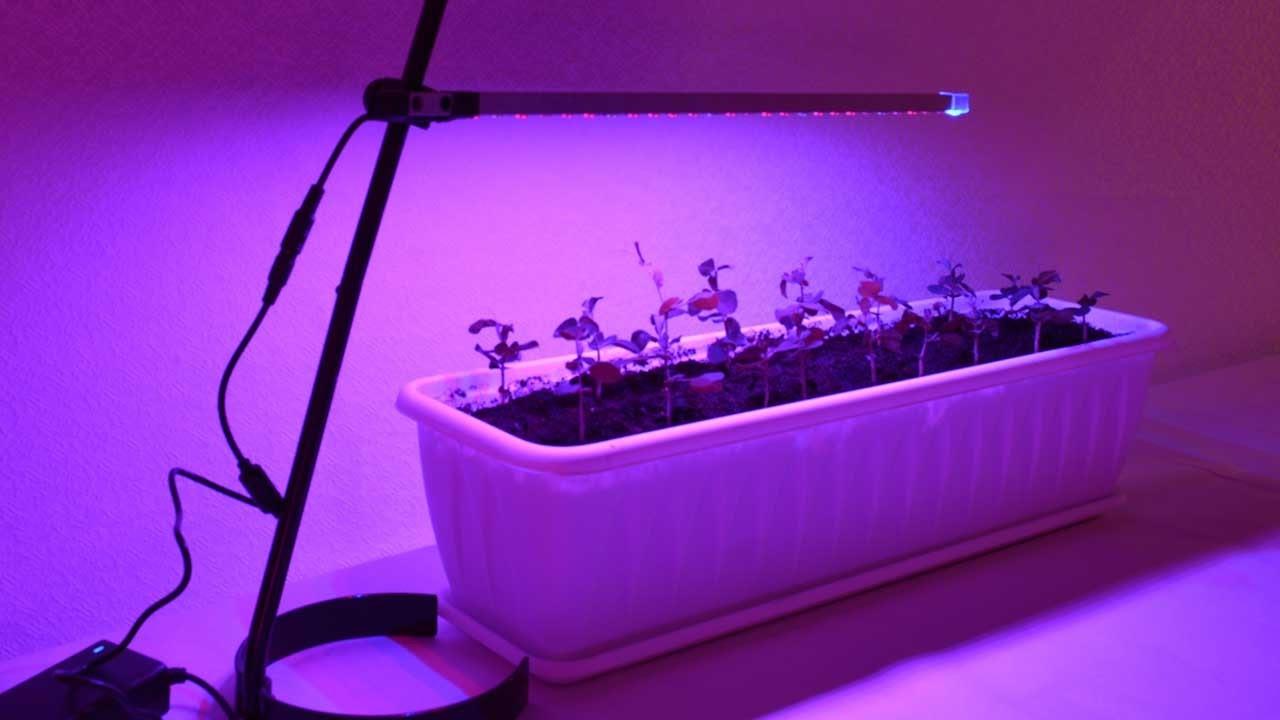 Настольная светодиодная лампа с подставкой для подсветки рассады, цветов в домашних условиях