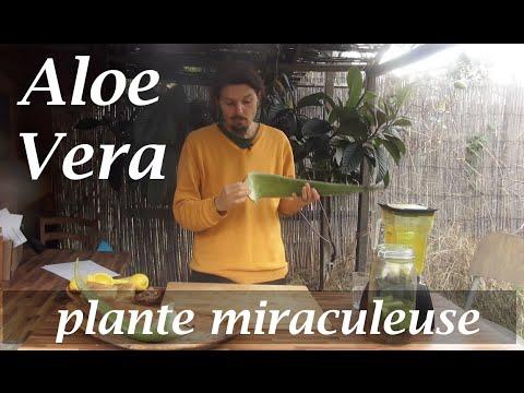Aloe vera , la plante 'miraculeuse' - www.regenere.org