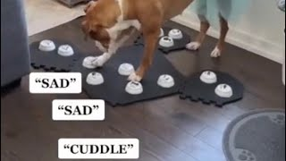 Dog Communicates with Human by Talking Buttons PT2
