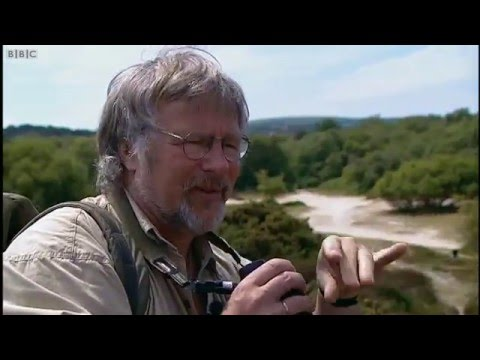 Reptiles on Bill Oddie Goes Wild 2001