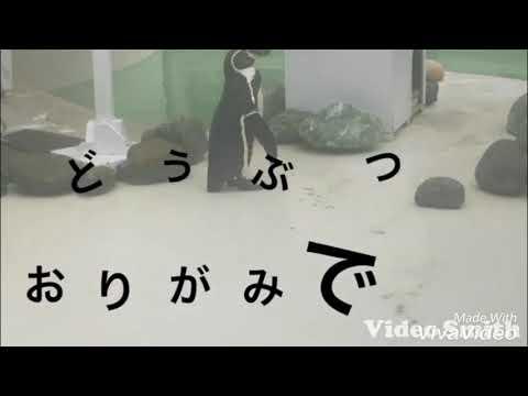 ペンギン サル 折り紙 視聴覚 グループワーク 本間先生
