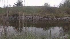 Jomalvikin kanavan ahvenet
