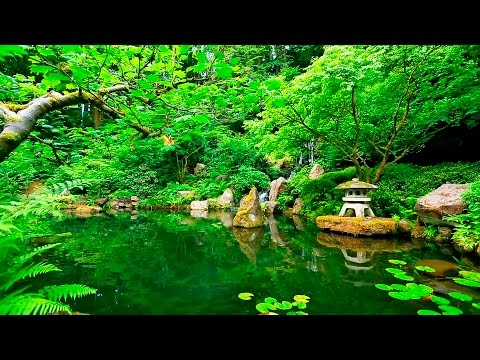 Deep Sleep Music and Nature Sounds - Zen Garden HD Relaxing