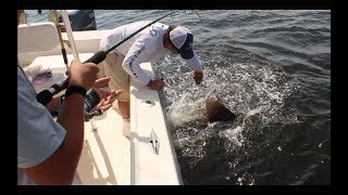 Catching Cownose Ray's