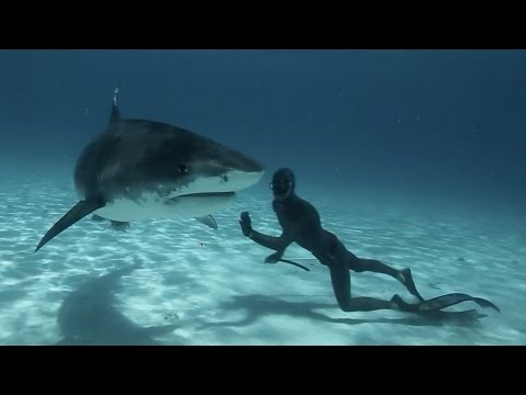 Freediving with Tiger Sharks