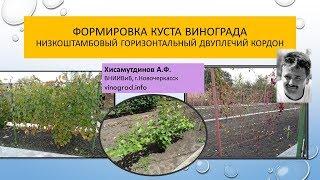 Горизонтальный двуплечий кордон на низком штамбе, Хисамутдинов АФ Новочеркасск