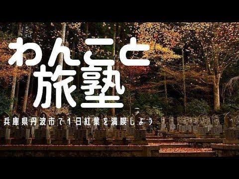 わんこと旅塾~日本の旅編 兵庫県丹波市で1日紅葉を楽しもう!1番のおすすめはここ!