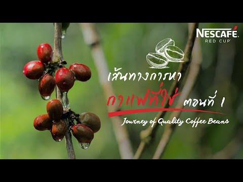 Journey of the Thai coffee bean : การเดินทางของเมล็ดกาแฟไทย