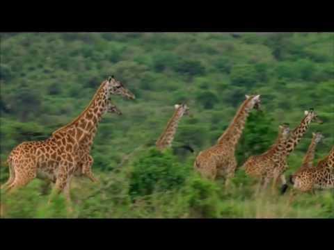Richard Hammond's Miracles of Nature - DVD - Madman Entertainment