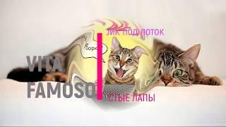 """Коврик под лоток """"Чистые Лапы""""//Коврик купить в Москве//Туалет для кошки➤"""