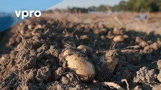 Onzichtbaar Nederland: de biologische aardappel