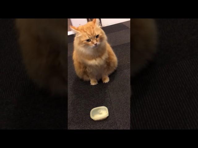 たの散歩〜猫カフェ編〜