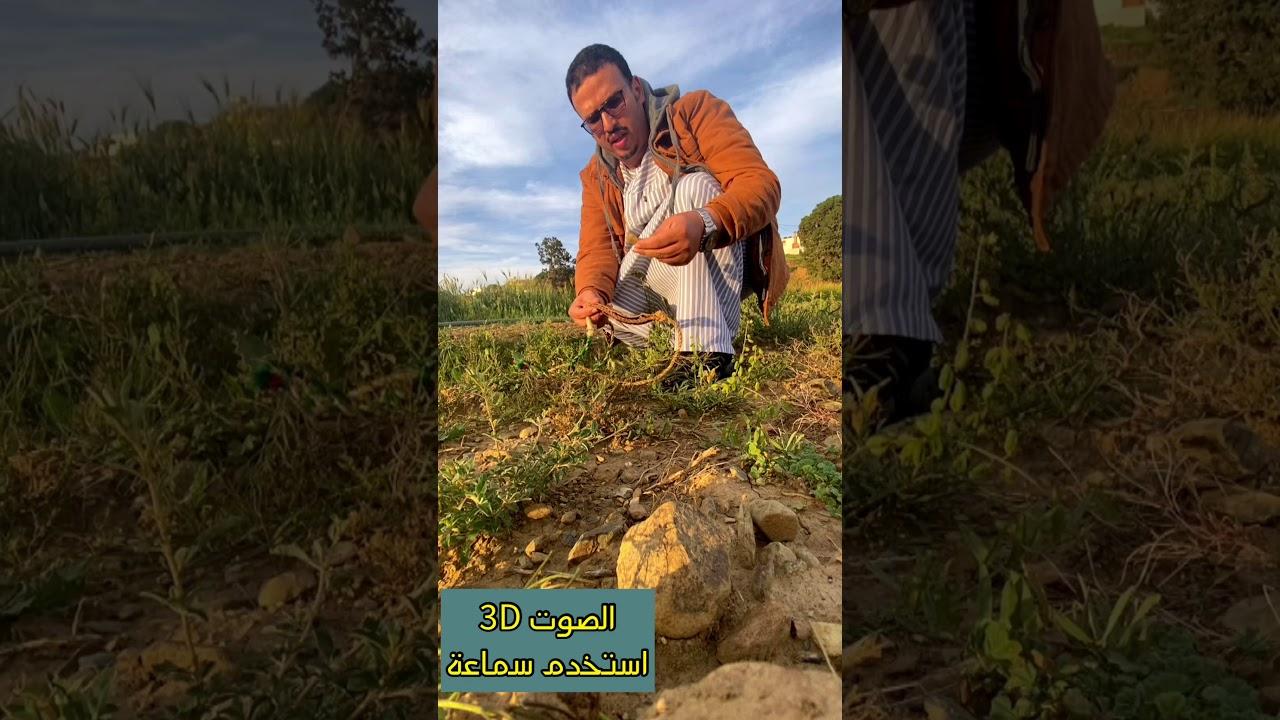 حماية المزارع من الطيور واستخدام (المرجمة) ماذا تسمونها بلهجتكم؟