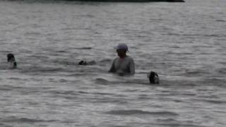 花音、初めての夏。 水は大好きなのに溺れます。 最初はみんな信じてい...