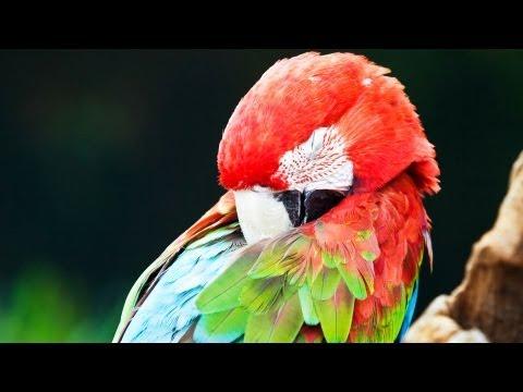 How Much Do Birds Sleep?   Pet Bird