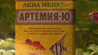 Живые рачки артемии - любимое блюдо моих рыбок. (Fish eating Artemia)