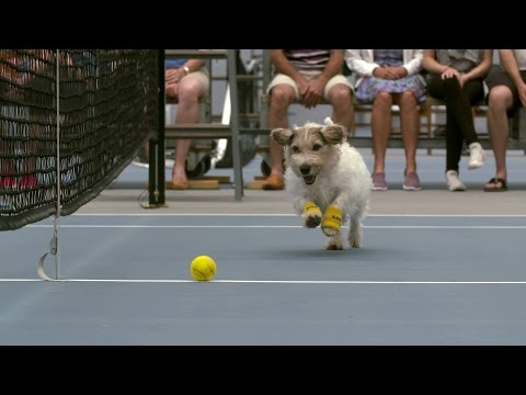 Thumbnail: Venus Williams and The Best Ball Boys in the World | ASB