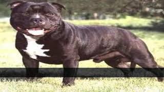 リストについて 品種の犬ます辛 の杖知られる人の親友が可能であり、こ...