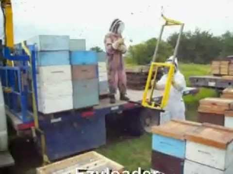 A Canadian Beekeepers Blog