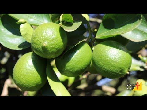 Clique e veja o vídeo Curso a Distância Produção de Limão Taiti