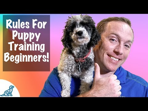 5 IMPORTANT Rules To Remember For Puppy Training BEGINNERS!