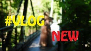 # 35 Vlog - НЕМЕЦКАЯ СВАДЬБА