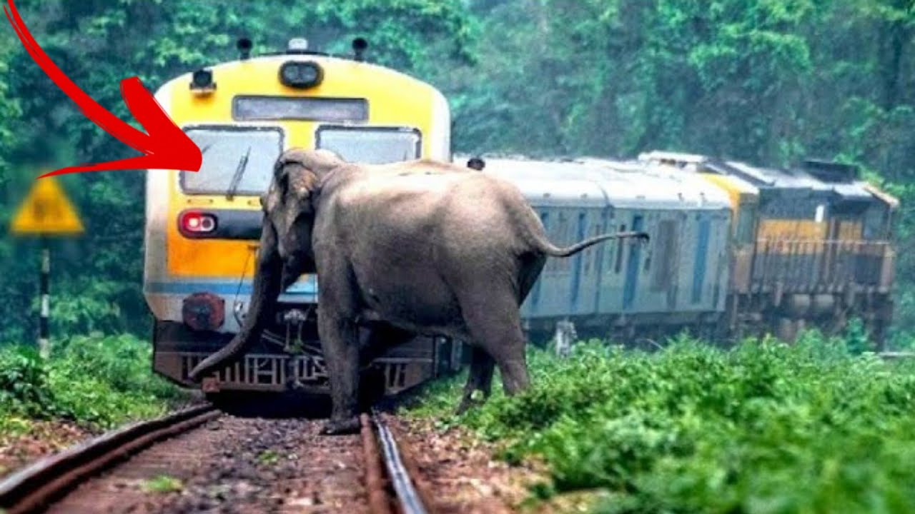 Animal vs Tain - Animals Hit By Train Compilation #3