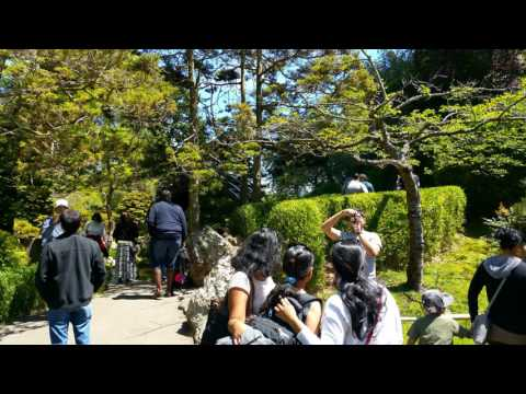 My Trip To Golden Gate Park In San Francisco Of California | USA Travel At Japanese Tea Garden