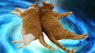 Котеи приколы. Рыжие котики смешная озвучка