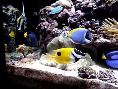 Moorish Idol Problems And Solutions