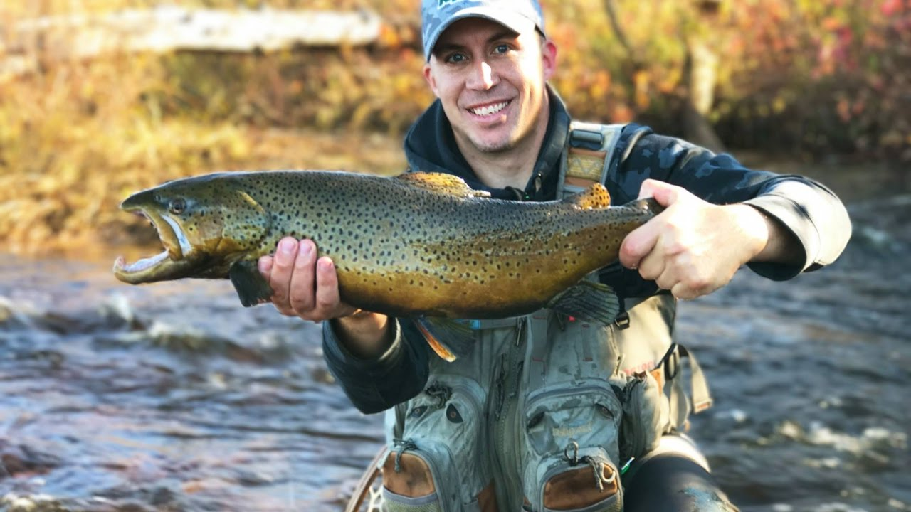 Upper peninsula fly fishing lake run brown trout 2016 for Fly fishing michigan