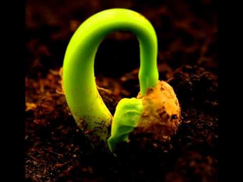 작은씨앗이20140721