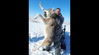 охота на волков в казахстане 2011(охота на волков., 2013-02-16T10:11:11.000Z)