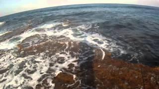 UL Shore spinning - Little Tunny - Haifa Bay - ISF Israel Sport Fishing