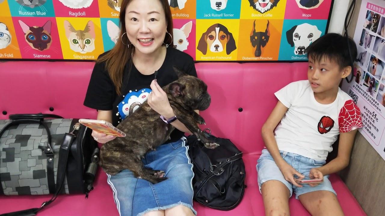 ARC 動物領養中心 - YouTube