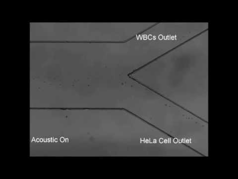 Acoustic separation of circulating tumor cells